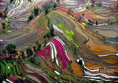 با رقیب رنگارنگ دیوار چین آشنا شوید