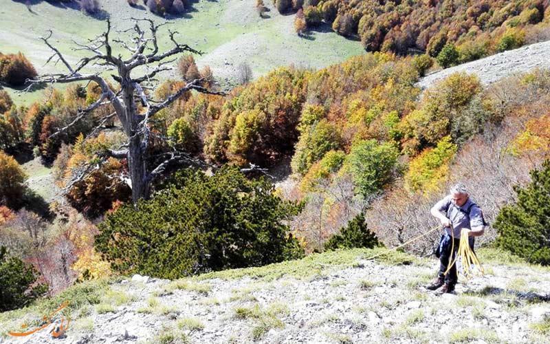 پیرترین درخت اروپا بعد از 1200 سال همچنان رشد می نماید!