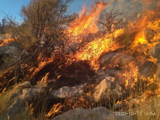 207 هکتار از مراتع و باغات بیجار طعمه آتش شد