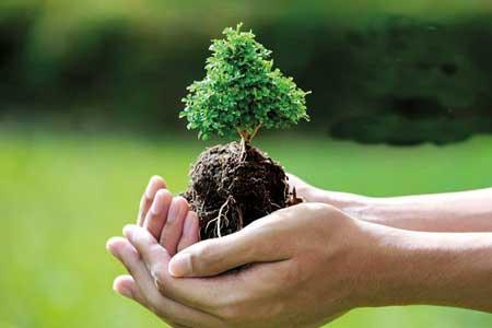 جای اندوه، بکارید درخت...